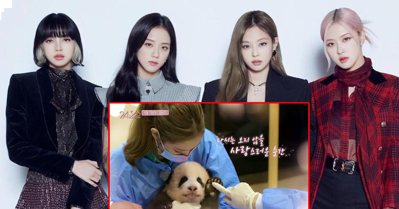 YG Entertainment Postpones Release Of  '24/365 With BLACKPINK' Last Episode Following Concerns Over Contact With Panda